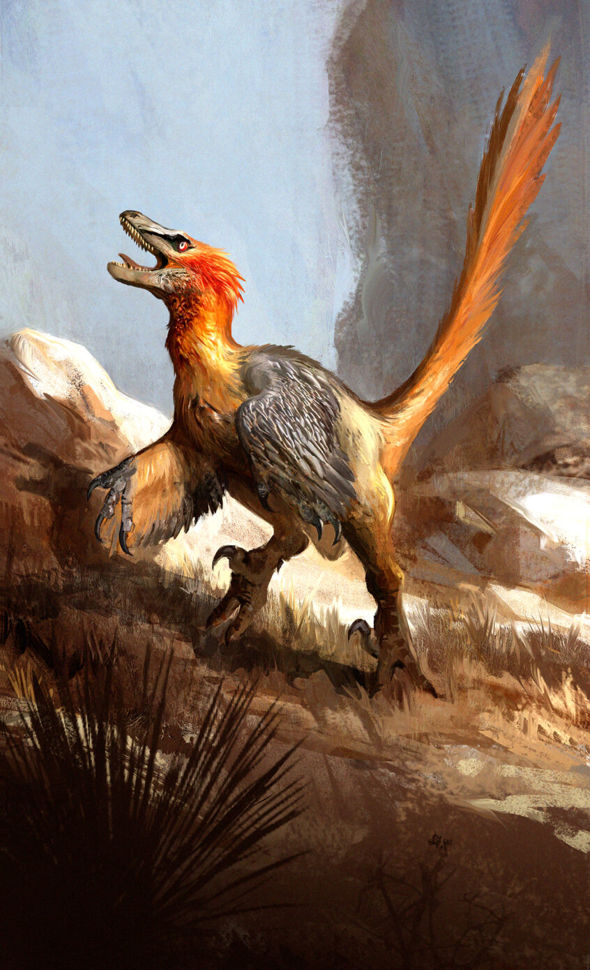 What Velociraptors Actually Looked Like