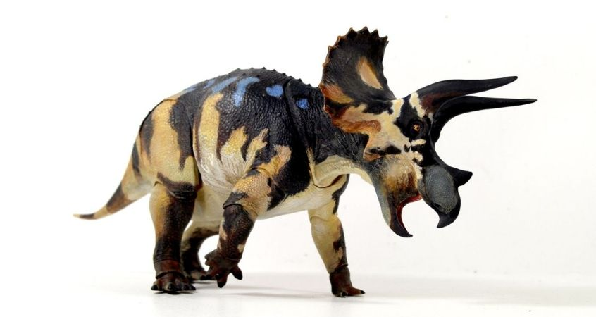 A Guide To Ceratopsian Dinosaurs