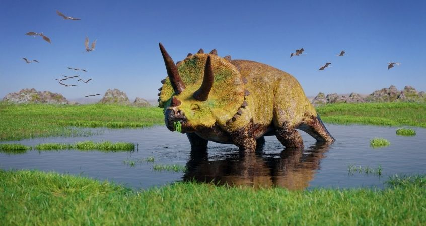 Fascinating Facts About Triceratops