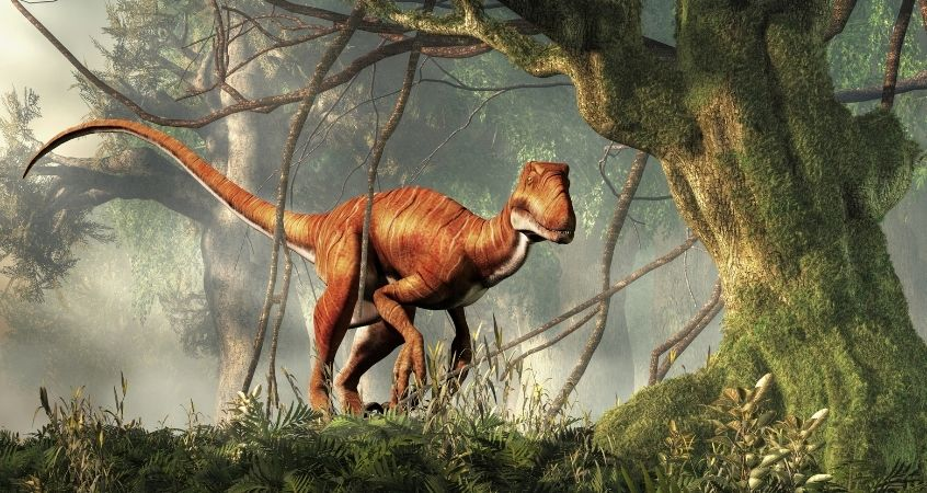 The Terrible Claw: Facts About Deinonychus