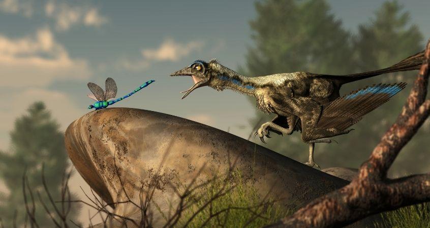 How Dinosaurs Were Similar To Birds