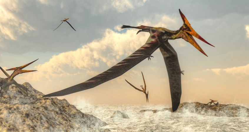 The Different Dinosaur-Like Creatures We Know Could Fly