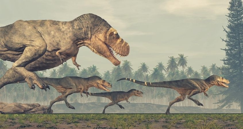 Top Myths and Misconceptions About Dinosaurs